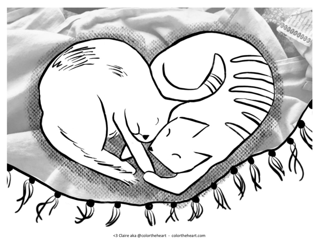 Two cats sleeping on a blanket, making a heart shape with their bodies.
